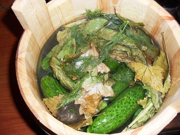Рецепт засолки бочковых огурцов