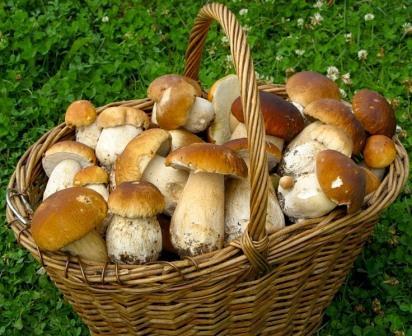 Белые грибы в томатном пюре