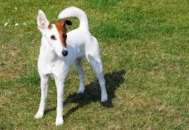 Породы собак — комнатные, охотничьи, служебные