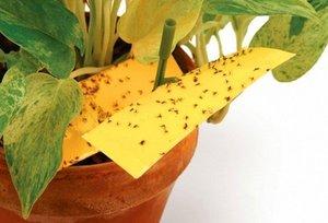 Как избавиться от мошек в цветочных горшках и некоторых других насекомых