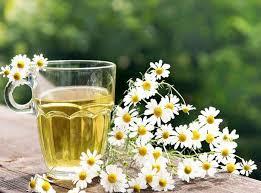 Чай Болотова при простудных заболеваниях