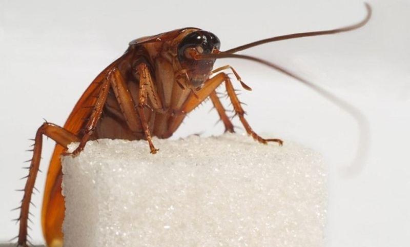 Чем травить тараканов