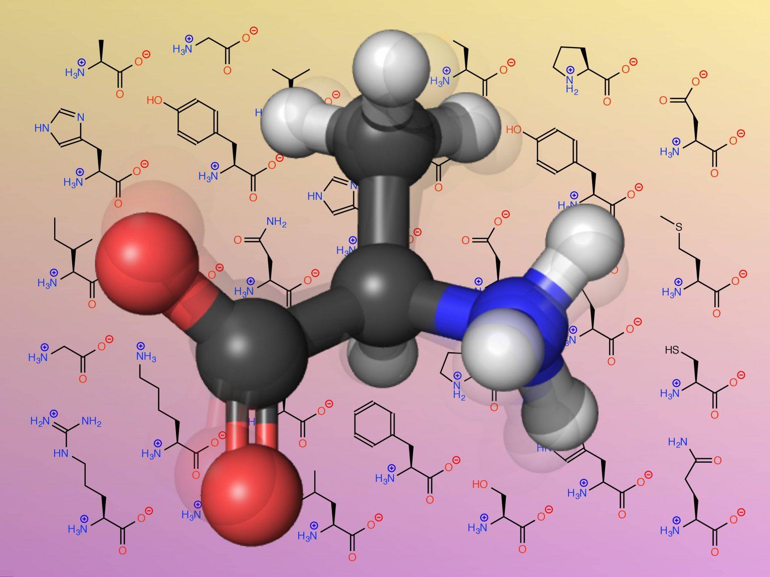 Аминокислоты: поддержат и омоложение, и спортивные достижения